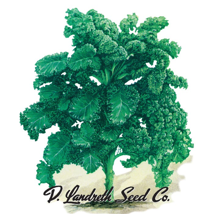 Siberian Kale - Packet