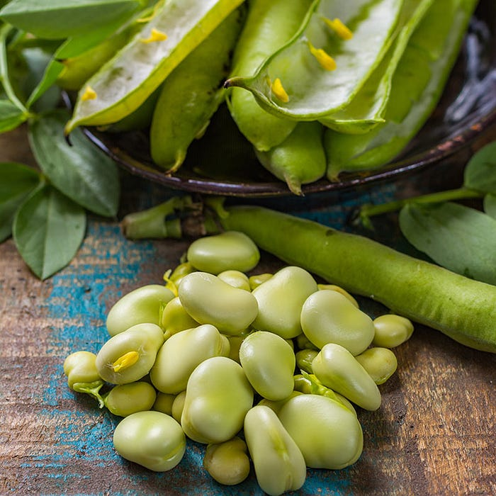 King Of The Garden Pole Lima Bean Seeds Landreth Seed