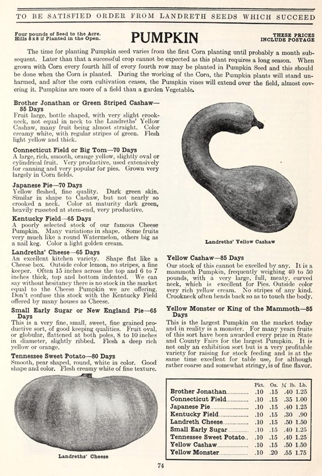 archival landreth seed catalog page pumpkin